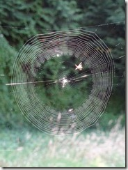 spider weaving its web