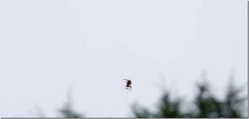 Spider against the gray day