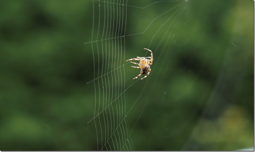 Spider and web sep 7 13